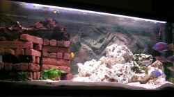 Aquarium Becken 1409
