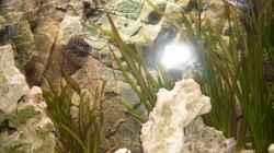 Besatz im Aquarium Becken 14104