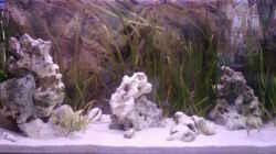 Aquarium Becken 14104