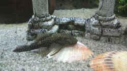 Besatz im Aquarium Mein Becken