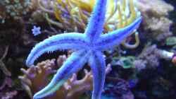 Besatz im Aquarium Juwel Trigon mit Panoramascheibe
