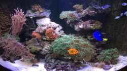 Aquarium Juwel Trigon mit Panoramascheibe