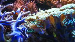 Pflanzen im Aquarium Juwel Trigon mit Panoramascheibe