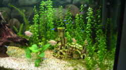 Dekoration im Aquarium Becken 1427