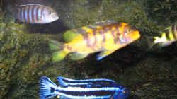 Besatz im Aquarium Becken 14272
