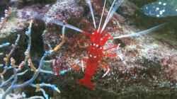 Besatz im Aquarium Becken 14360