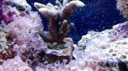Pflanzen im Aquarium Becken 14360