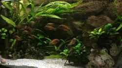 Besatz im Aquarium Büro