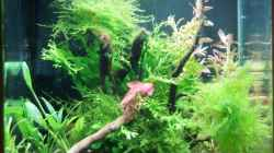 Aquarium Dennerle 20er
