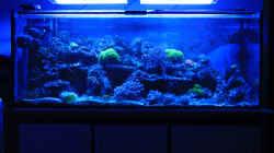 Aquarium Mein kleines Riff