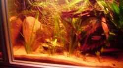 Pflanzen werden dichter und wachsen ziemlich gut!!!