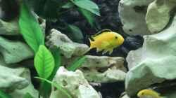 Besatz im Aquarium Becken 15