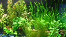 Pflanzen im Aquarium existiert in der Form nichtmehr