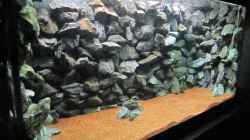 Dekoration im Aquarium Baby Home Malawi