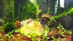 Aquarium 80l 6-eck Aquarium