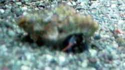 Besatz im Aquarium A Piece of Reef Obsolete