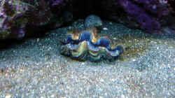 Pflanzen im Aquarium A Piece of Reef Obsolete