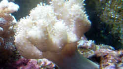 Dekoration im Aquarium A Piece of Reef Obsolete