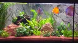 Aquarium Trigon 360
