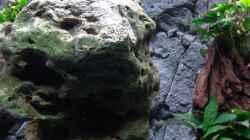 Dekoration im Aquarium Malawi 1
