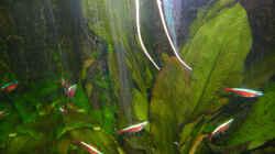 Besatz im Aquarium Becken 1559