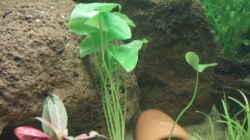 schöne Pflanze, die ich leider nicht bestimmen kann