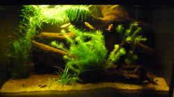 Aquarium Prachtkärpflinge