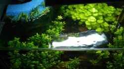 Aquarium Mein kleines Braunes