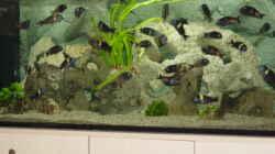 Aquarium Becken 1583