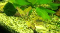 Pflanzen im Aquarium Grüne Oase existiert nur noch als Beispiel