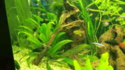 Dekoration im Aquarium Grüne Oase existiert nur noch als Beispiel