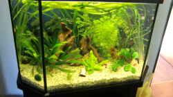 Aquarium Grüne Oase existiert nur noch als Beispiel