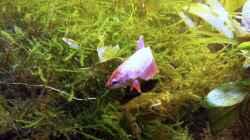 Besatz im Aquarium Asia-Becken