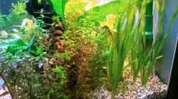Pflanzen im Aquarium Asia-Becken