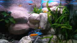 Aquarium 672L Mbuna Becken - nur noch als Beispiel -