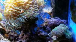 Aquarium Becken 16068