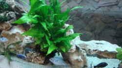 Pflanzen im Aquarium Becken 1609