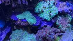 Pflanzen im Aquarium Delta-Becken