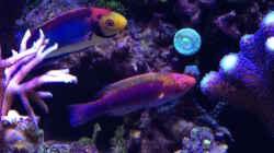 Aquarium Delta-Becken