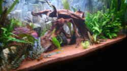 Aquarium Juwel Aquarium
