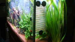 Pflanzen im Aquarium Juwel Aquarium