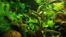 Aquarium Mein kleines Erstes