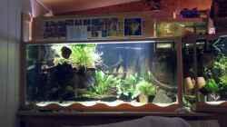 Aquarium Aquariumanlage Diskus & mehr Becken 16219