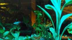 Aquariumtisch