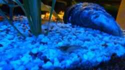 Aquariumtisch mit LED farbwechsel
