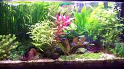 Aquarium Wohnzimmeraquarium Süsswasser