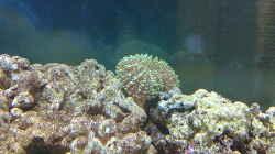 Pflanzen im Aquarium BIKINI BOTTOM