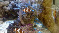 Besatz im Aquarium BIKINI BOTTOM