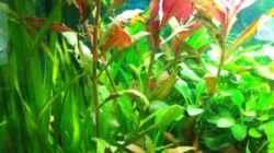 Aquarium Waterhome