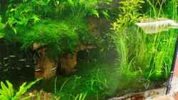 Aquarium Amazonas  nur noch Beispiel
